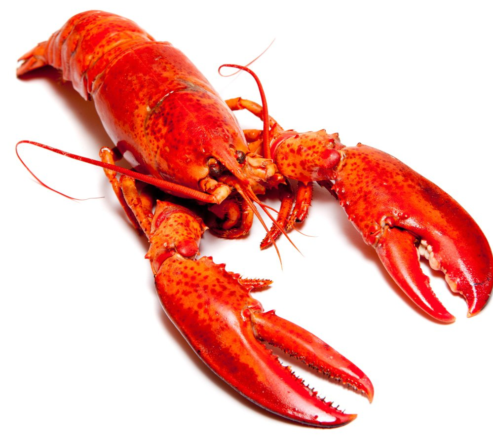 Lobster or Human – Which Personality Type Are You? – Babar Ahmad